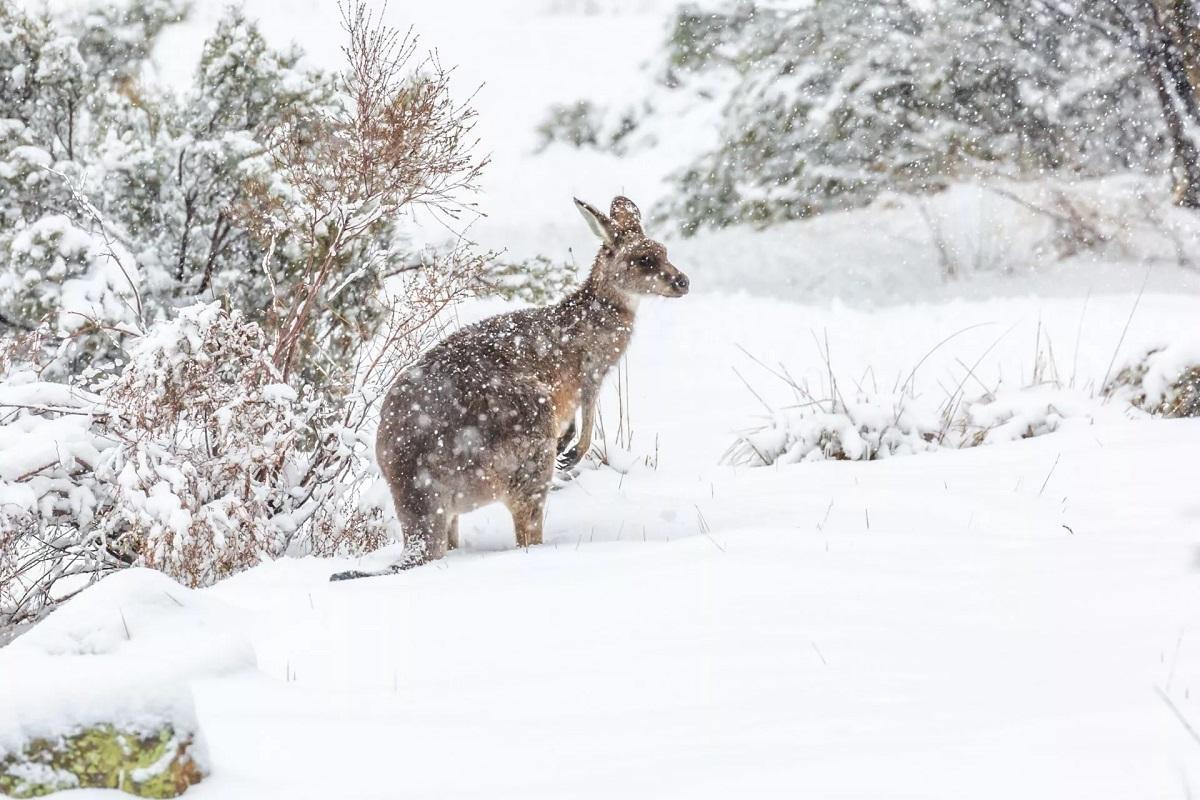 102. Australian winters